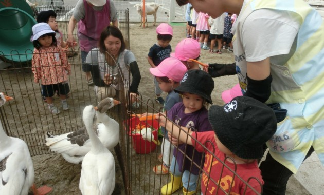 第2幼稚園の「ふれあい動物園」のようす